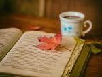 leaves-1076307_640