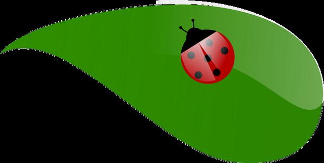 ladybug-48395_640